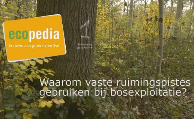 Waarom vaste ruimingspistes gebruiken bij bosexploitatie
