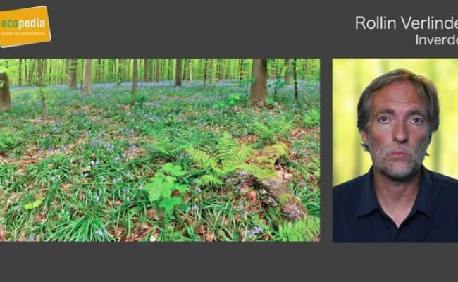 Wat is een ferrarisbos-