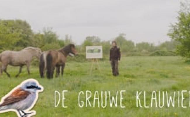 Inverde - De Grauwe Klauwier