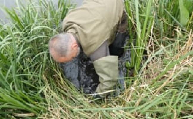 Veilig, wettelijk en diervriendelijk gebruik van een vangkooi om muskusratten te vangen