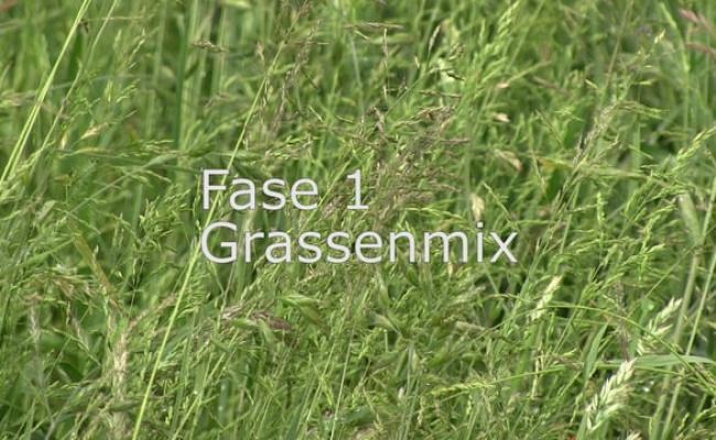 Fase 1 grasland, grassenmix