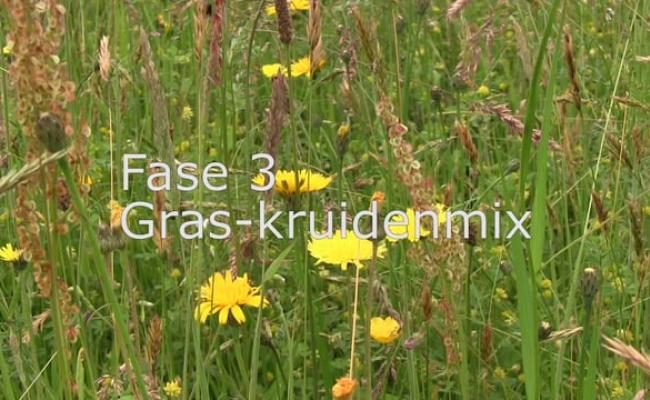 fase3 vimeo