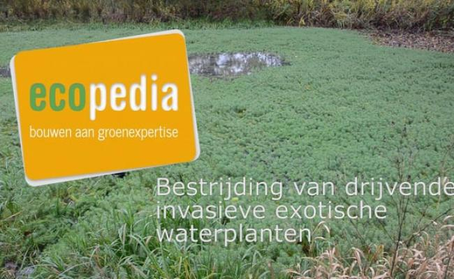 Het bestrijden van een kleine besmetting met exotische waterplanten