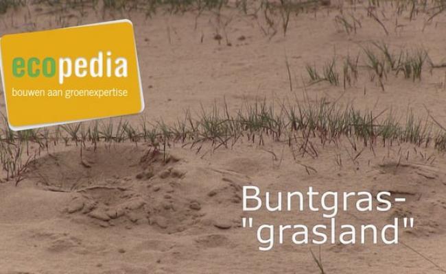 """Buntgras """"grasland"""""""